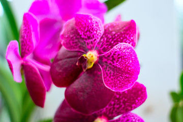 Nice flowers of purple orchids in a garden