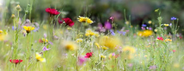Fototapeta wildblumenwiese natur banner obraz