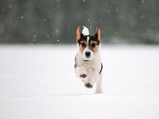 Portrait of dog running on snowy landscape