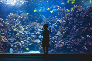 Rear view of boy standing by the glass at the aquarium