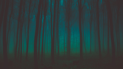 Trees in the forest at night