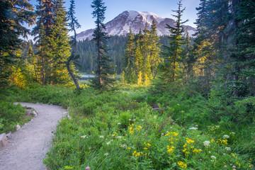 Trail near Mount Rainier, Washington
