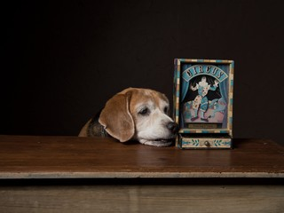 dog with Music box