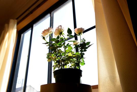 flowers in vase on windowsill