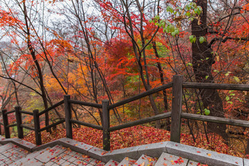 road in Namsan Park in Seoul surrounded by red and yellow autumn trees