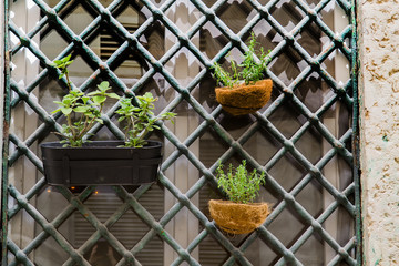 Window with flower pots and grille