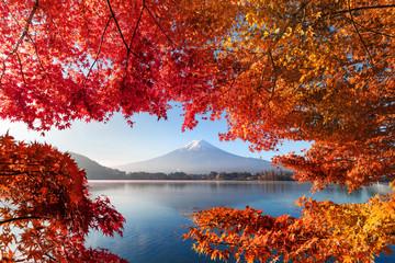 Fall foliage in autumn season and Mountain Fuji near Fujikawaguchiko, Yamanashi. Trees in Japan...