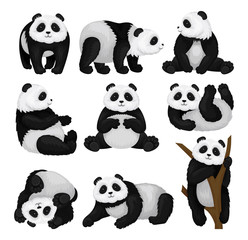Flat vector set of funny panda in different poses. Bamboo bear with fluffy black and white fur. Tropical animal