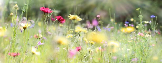 Fotoväggar - wildblumenwiese natur banner pastell