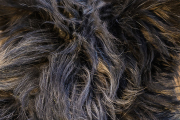 Abstract background of dog hair