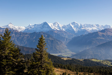 Autumn alpine landscape on the Niederhorn in the Bernese Oberland in Switzerland with Eiger, Moench and Jungfrau in the background