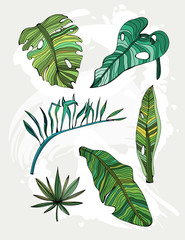 Hand drawn tropical leaves. Colored graphic vector set. All elements are isolated