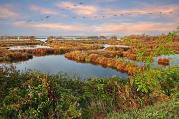 Po Delta Park, Veneto, Italy: landscape of the swamp with a flock of pink flamingos