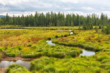 Summer landscape with a small river among the tundra