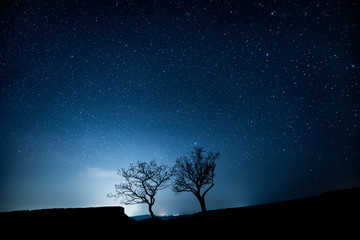 Two trees in the mountains under a starry sky