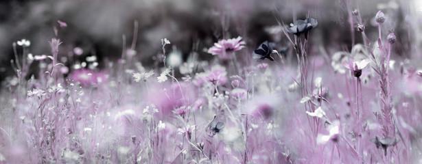 Fotoväggar - wildblumenwiese natur konzept trauer