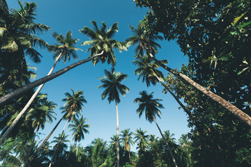 Coconut trees on tropical island in the sunshine