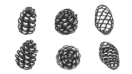 Set of pine cones silhouette on white background.Black leaf vector by hand drawing