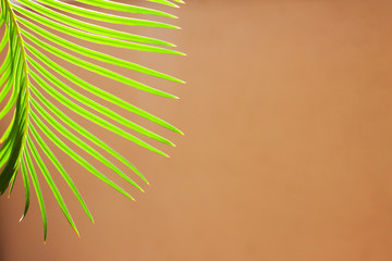 Tropical palm leaves on beige pastel background. Minimal concept. Flat lay.