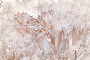 Floral white-pink background. Dahlias flowers close-up on a white background. Petals of flowers. Greeting card. Nature..