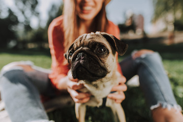Close up of lovely pug puppy is sitting near his smiling owner in sunny park