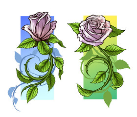 Graphic detailed cartoon pink roses flower with stem and leaves. On white background. Vector icon set.