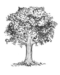 Black brush and ink artistic rough hand drawing of tree.