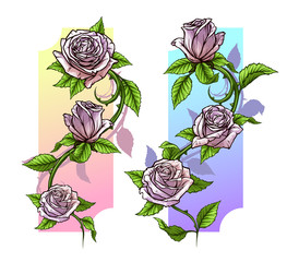 Graphic detailed cartoon pink roses flower with stem and leaves. On white background. Vector icon set. Vol. 1