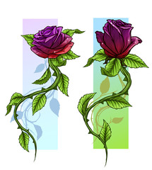 Graphic detailed cartoon violet and red roses flower with stem and leaves. On white background. Vector icon set. Vol. 2