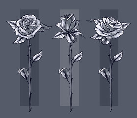 Graphic detailed graphic black and white roses flower with stem and leaves. On gray background. Vector icon set. Vol. 11