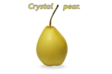 Realistic 3d Chinese pear (Latin Pýrus) of the Crystal variety, on a white background with realistic shadows. Vector illustration.