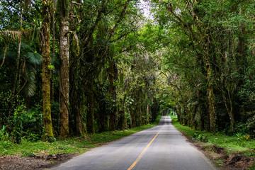 Road inside a rainforest in Brazil