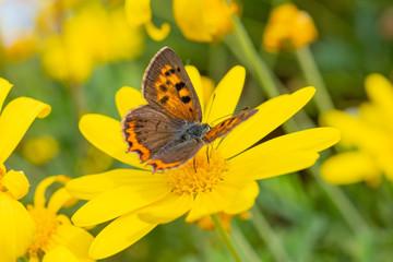 昆虫と黄色い花 マクロ撮影 マクロの世界