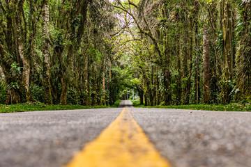 Road inside a rainforest