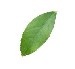 Fresh green citrus leaf on white background