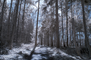 forest in infrared -nopeople