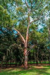 Longshot of an urban tree in a green park
