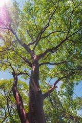 Sun reflecting through a wild tree