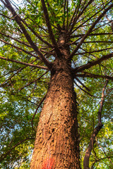 Low angle view of a big leafy tree