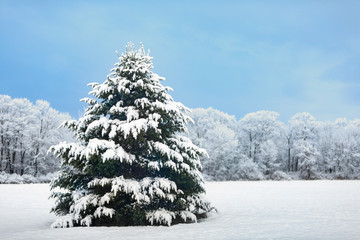 Beautiful Snowy Outdoor Decorated Christmas Tree