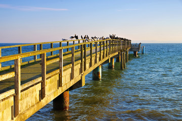 Sassnitz Seebruecke - Sassnitz pier with many birds