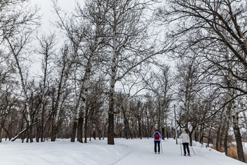 Winter landscape with cross-country skiing tracks, winter forest
