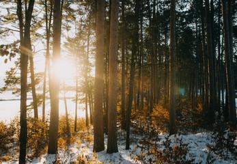 Sun Shining Through Trees in Autumn