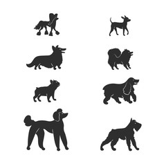 Vector illustration. Set silhouette icons of dogs. Popular breeds: spitz, french bulldog, english cocker spaniel, chinese crested, royal poodle, mittelschnauzer, corgi, russian toy terrier.