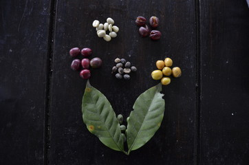 Various Stages of a Coffee Bean - Salento, Colombia
