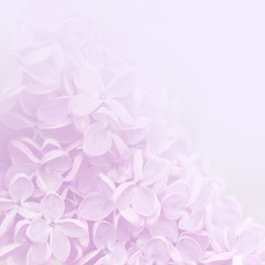 Pink background of lilac flowers.