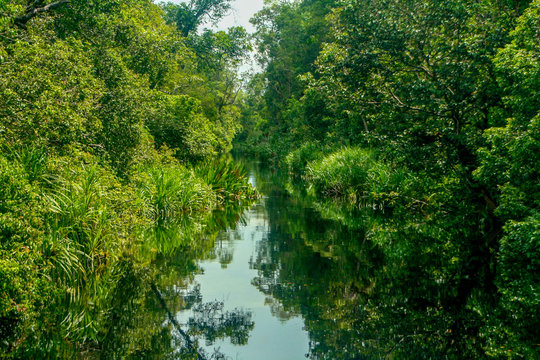 Reflections of the sky and dense, lush tropical jungle in the Sekonyer River in Tanjung Puting National Park, in Central Kalimantan, Indonesian Borneo