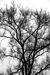 The branches light matting