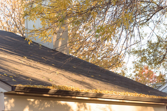 Close up rain gutter on residential home clogged with dried fall leaves. Shingles and gutter with dry brown leaves. Home roof maintenance problem with debris, twigs on gutter concept