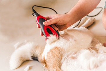 Grooming hair of a mixed breed dog